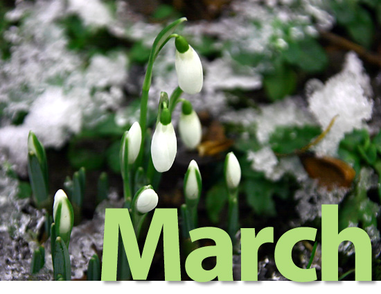 March Visiting Angels NJ Newsletter image