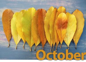 October leaf image